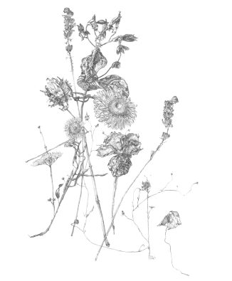 Sammelsurium der Pflanzen